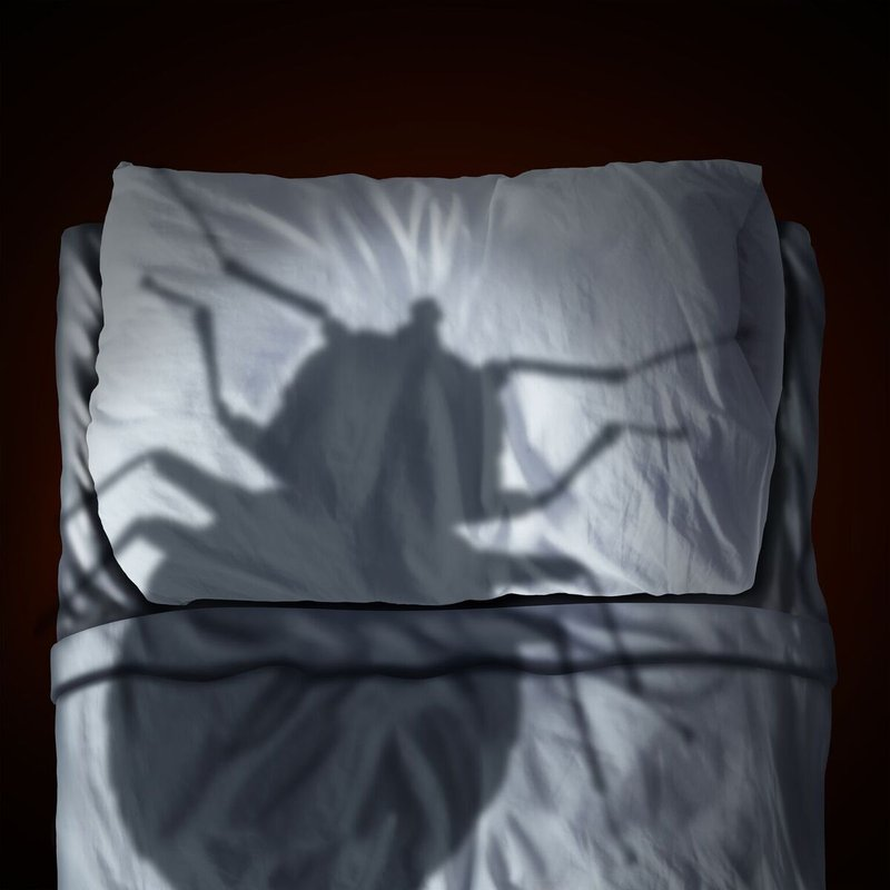 Why You Should Only Treat Your Home For Bedbugs With Heat
