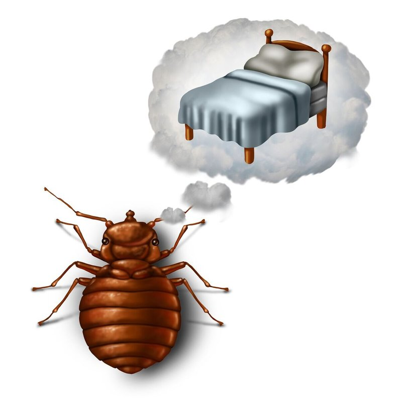 What Are the Different Methods For Ridding Your Home Of Bed Bugs?