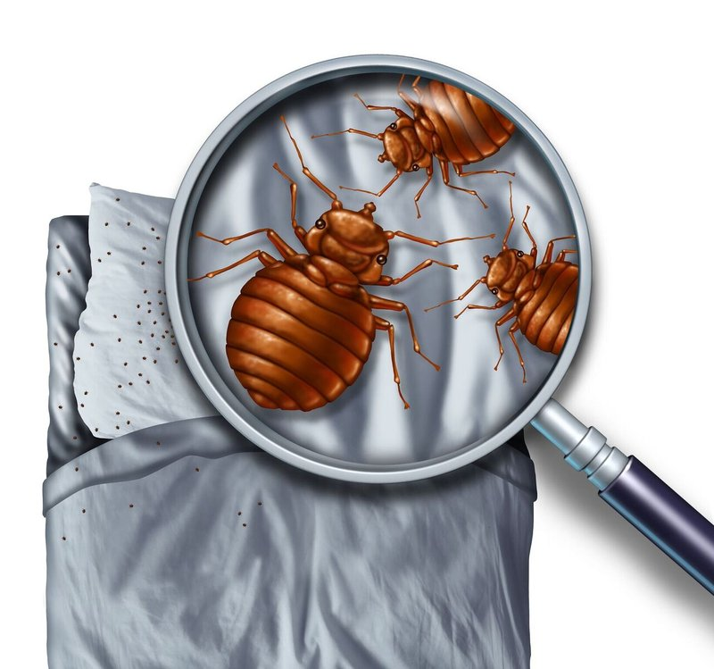 Bed Bugs in Kamloops at All Time High - How To Get Rid of Them?