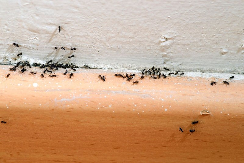 Bugging Out: 5 Signs it`s Time To Call Pest Control For Your Insect Infestation